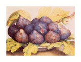Still Life of Figs Prints by Giovanna Garzoni