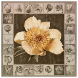 Pivoine Jaune Prints by Laurence David