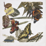 Butterflies and Larva, Illustration Photographic Print