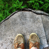 Shoe Shot, on a Stump Photographic Print by Rick Harris