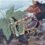Scorpion (Scorpiones), Illustration Photographic Print
