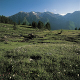 Wild Flowers on a Landscape, Orsiera-Rocciavre Nature Park, Chisone Valley, Torino Province Photographic Print by P. Jaccod