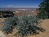 Desert Vegetation Growing on Rocks, Eastern Utah, Utah, Usa Photographic Print by Alex Adams
