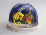 Close-Up of Figurines of a Sea Horse and a Fish in a Snow Globe Photographic Print
