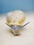 Snail Photographic Print by Christina Gandolfo