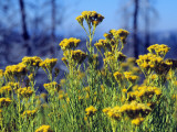 Close Up of Yellow Wild Flowers, Yosemite National Park, California, Usa Photographic Print by Alex Adams