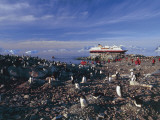 Group of Gentoo Penguins at a Seaside, Cuverville Island, Antarctica (Pygoscelis Papua) Photographic Print by C. Dani I. Jeske