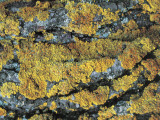 Close-Up of a Rock Covered with Lichen Photographic Print by R. Carnovalini