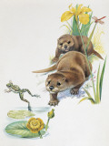 Close-Up of Two Otters Hunting for a Frog (Lutra Lutra) Photographic Print