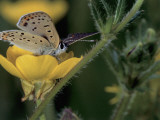 Close-Up of a Butterfly Pollinating a Flower Fotografie-Druck von Christian Ricci