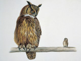 Close-Up of an Eurasian Eagle Owl (Bubo Bubo) Perching on a Branch with an Eurasian Pygmy Owl Photographic Print