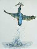 Close-Up of a Common Kingfisher Gripping a Fish (Alcedo Atthis) Fotoprint