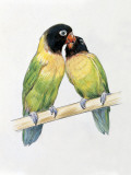 Close-Up of a Pair of Masked Lovebirds Perching on a Branch Photographic Print
