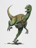 Close-Up of a Troodon Dinosaur (Troodon Formosus) Photographic Print
