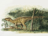 Rhabdodon Dinosaur Eating Plants in the Forest Photographic Print