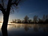 Winter Morning at Aller Flood Photographic Print by Dirk Heuer