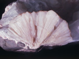 Close-Up of Stilbite Photographic Print by C. Bevilacqua