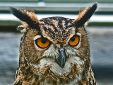 Eagle Owl Eyes Photographic Print by Dr. David J. Otway