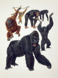 Close-Up of a Group of Primates Photographic Print