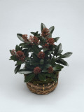 Close-Up of a Japanese Skimmia Plant (Skimmia Japonica) Photographic Print by C. Dani