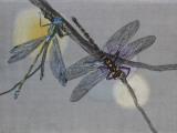 Dragonfly, Illustration Photographic Print