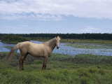 Wild Horse Standing in a Field, Tsitsikamma National Park, South Africa Photographic Print by L. Romano