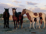 Horses Standing in a Farm, Arizona, Usa Photographic Print by L. Romano