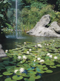White Water Lilies in a Pond (Nymphaea Alba) Photographic Print by D. Dagli Orti