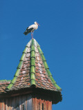 Low Angle View of a Stork Perching on the Roof of a Building, Ungersheim, Alsace, France Photographic Print by W. Buss