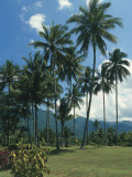 Coconut Palms on a Landscape (Cocos Nucifera) Photographic Print by C. Dani