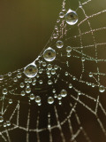 Web&#39;s Eyes Photographic Print by Frederic Labaune