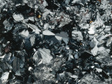 Close-Up of Hematite Photographic Print by A. Rizzi