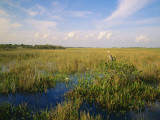 Usa, Florida, Everglades National Park Photographic Print by Jeff Foott