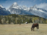 Mountain Looms High as Horses Graze Photographic Print by Jeff Foott