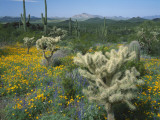 Usa, Arizona, Organ Pipe Cactus National Monument Photographic Print by Jeff Foott