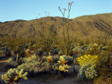 Anza-Borrego Desert State Park with Ocotillo Photographic Print by Jeff Foott