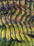 Detail of the Ridged Surface of a Cardon Cactus Photographic Print by Jeff Foott