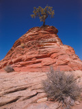 Ponderosa Pine Sits on Top of Navajo Sandstone Photographic Print by Jeff Foott