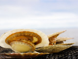 Fresh Scallop on Bbq by the Sea Photographic Print by Ippei Naoi