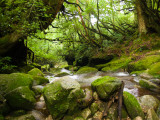 Stream in Ancient Forest Photographic Print by Ippei Naoi