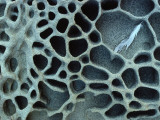 Rock Pattern with Honeycomb-Like Caverns Lámina fotográfica por Jeff Foott