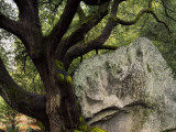 Usa, California, Granite Boulder, Canyon Oak Photographic Print by Jeff Foott