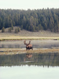 Male Moose Stands in Water Photographic Print by Jeff Foott