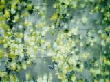Peas in Water Fotografisk tryk