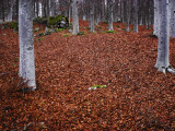 The Ground in a Forest Covered with Autumn Leaves Photographic Print by Lasse Pattersson