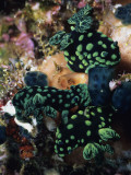 Spotted Branches Growing Atop Multi-Colored Coral Heads in Ocean Bunaken Island Photographic Print