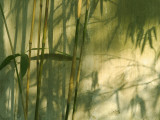 China, Shanghai, Shadow of Bamboo on the Wall in Yuyuan Garden Fotografie-Druck von Keren Su