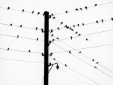 Small Birds Sitting on Power Lines Photographic Print