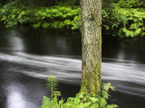 A Tree by a River Photographic Print by Lasse Pattersson
