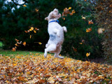 Jumping for Joy Photographic Print by Jessica Florence